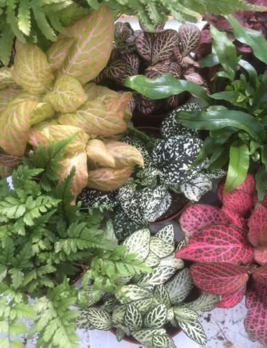 Pack  Exotique 3 plantes